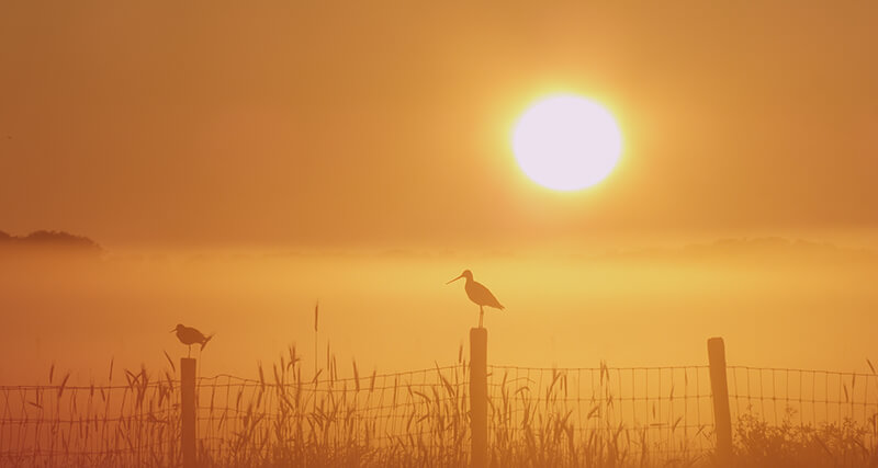 grutto zonsopgang